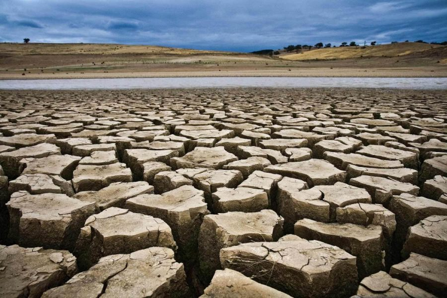 Courtesy of California Political Review. The drought has negatively impacted the environment in many ways.