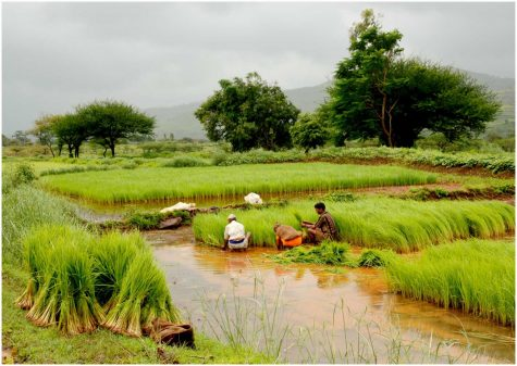 Farming Frustrations in Indian Agriculture