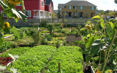 How To Grow A Neighborhood