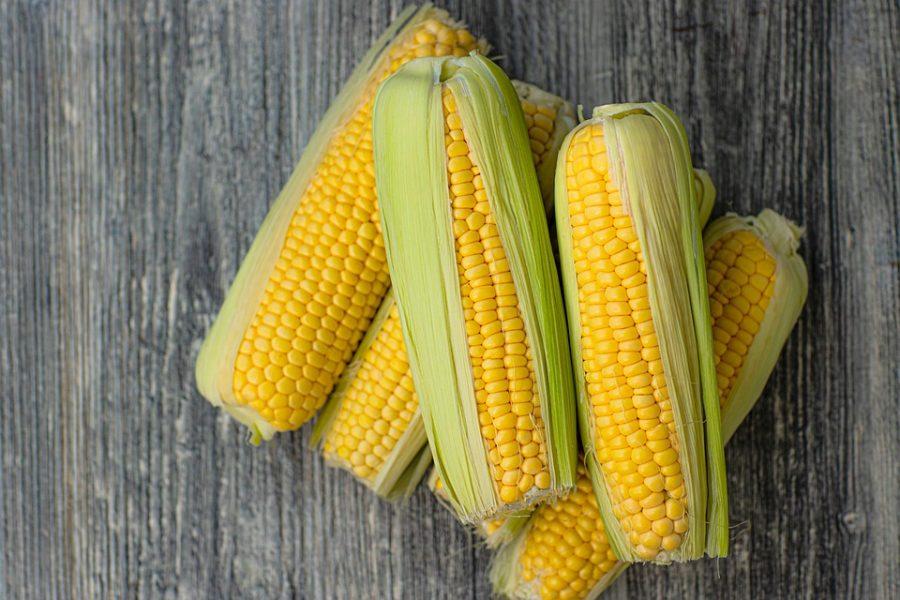 Ozone: A Threat to Corn