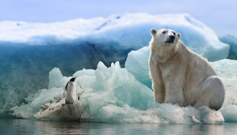 Polar bears rely on sea ice for traveling, hunting, and finding mates; without it, the search for food becomes more arduous, leading them to face longer and longer periods of starvation.